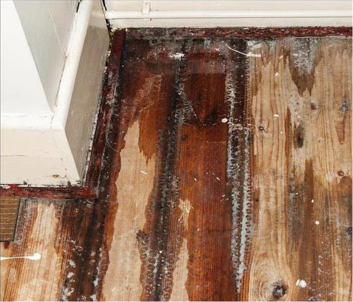 Abingdon Water Damaged Flooring