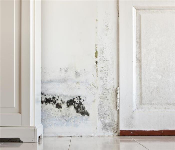 Mold Remediation Managing Mold Damage Efficiently in Bristol