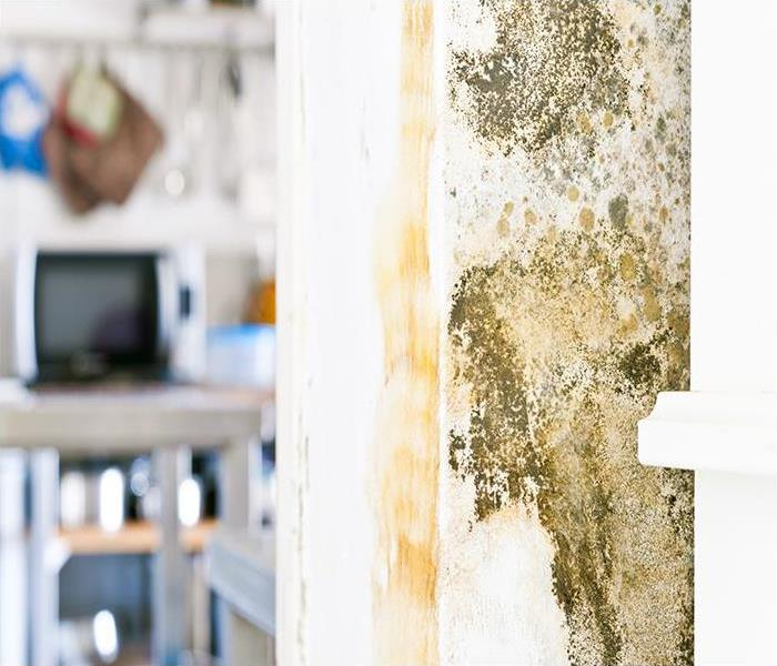 Mold Remediation Mold Damage Can Harm Your Bristol Home And Your Belongings
