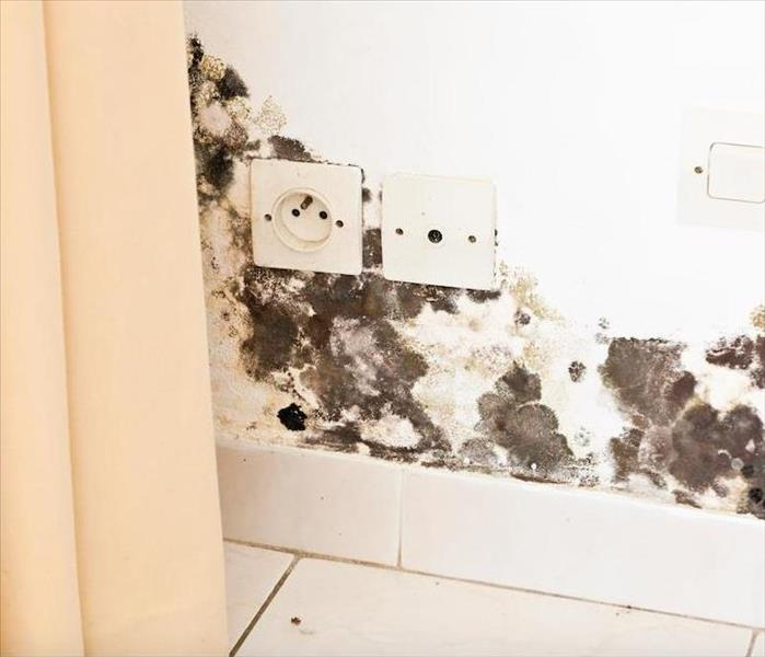 Mold Remediation Does Home Insurance Cover Mold Damage in Damascus?