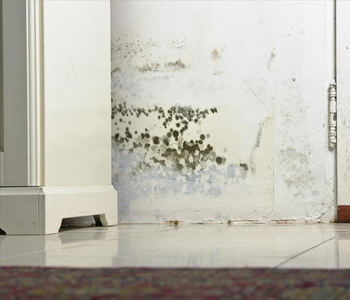 Mold Remediation Professional Help Dealing with Mold Damage in Your Bristol Area Home
